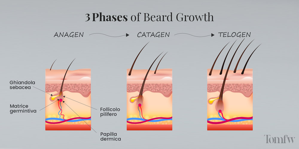 beard growing timelapse